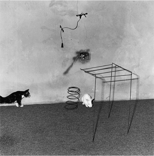 Secession Secession  Roger Ballen