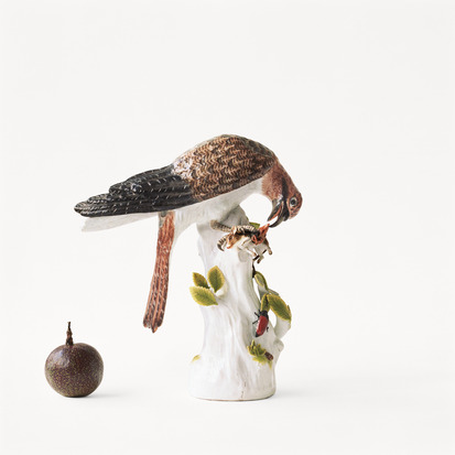 Michelle Elzay Passion Fruit Sparrow Hawk, 2013